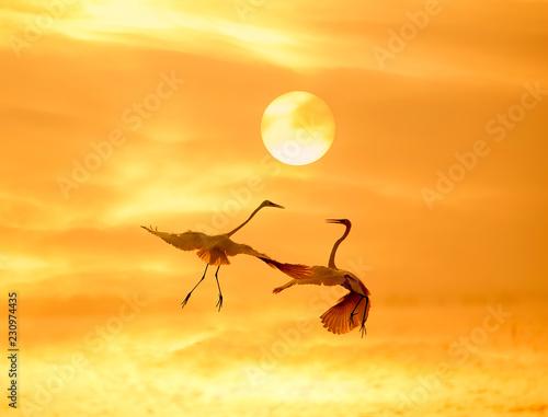 Foto op Canvas Zee zonsondergang egrets play in sunset