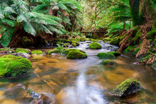 Cascading Water Of The South G...