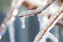 Icicles On The Branches Of A Tree In Winter