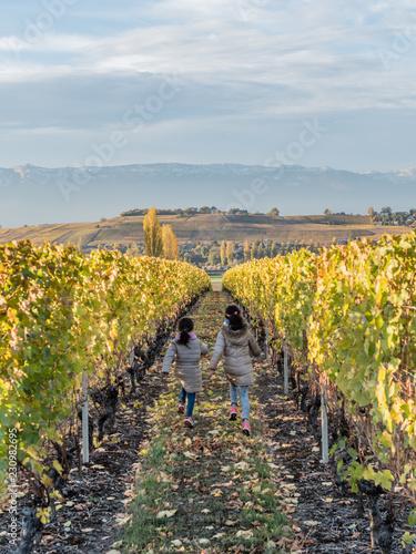 Fotografie, Obraz  Enfants courant dans un vignoble Suisse en automne dans le Genevois