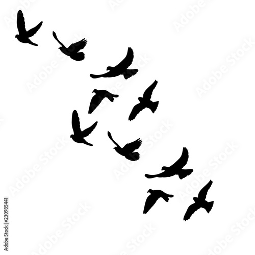 vector isolated silhouette of flocks of birds Canvas Print