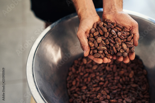 Pinturas sobre lienzo  Worker holding cocao beans in an artisanal chocolate making factory