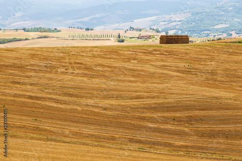 Fotografie, Obraz  campo di grano in estate dopo la mietitura