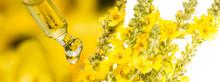 Extract From Verbascum Densiflorum, Mullein Flower