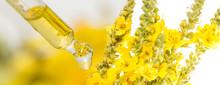 Herbal Extract Close Up - Macro Photo (mullein Flower - Verbascum)