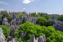 The Limestone Stone Forest On Sunny Day, Kunming Yunnan China.