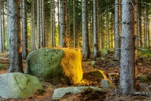 Spruce Forest With Large Boulders In The Evening Light, Near Wernigerode, Harz, Saxony-Anhalt, Germany, Europe