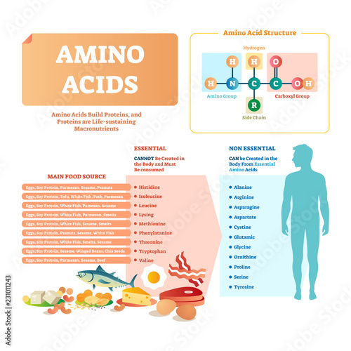 Photo Amino acids vector illustration