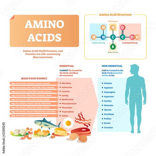 Amino acids vector illustration Wallpaper Mural