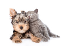 Yorkshire Terrier And Kitten L...