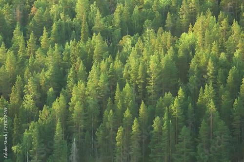 Foto auf Gartenposter Wald texture coniferous forest top view / landscape green forest, taiga peaks of fir trees
