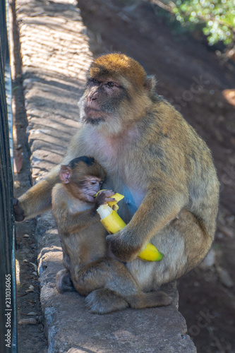 Foto op Plexiglas Aap a monkey with a child eating a banana