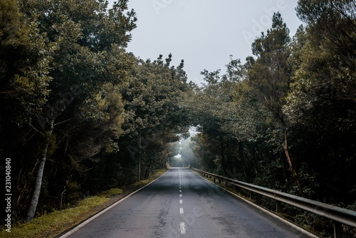 Empty road surrounded by trees - 231040840