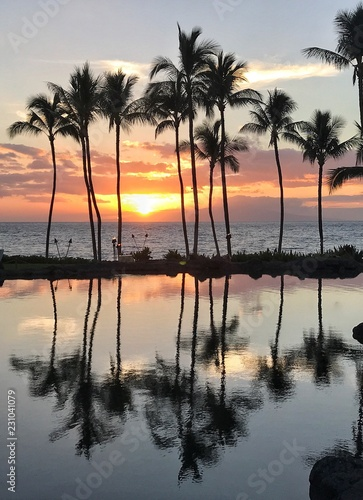 Scenic view of palm tree with sea during sunset