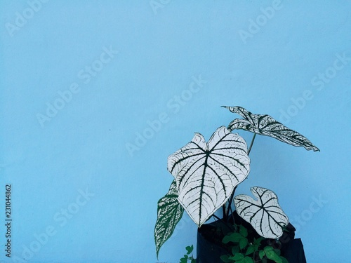 Plant against blue background