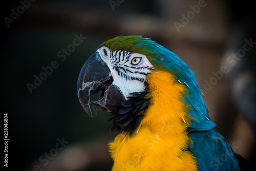 Foto op Aluminium Papegaai Blue yellow and green bird posing.