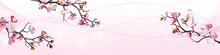 Pink Cherry Flowers Isolated O...
