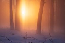 Christmas Winter Nature