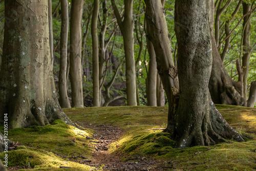 Foto op Canvas Weg in bos Wald
