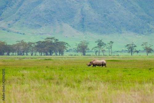 Deurstickers Neushoorn Black rhinoceros (Diceros bicornis) in Ngorongoro Conservation Area, Tanzania
