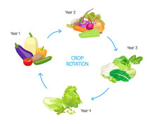 Crop Rotation Agricultural Practice, Farming Seasonal Cycle, Soil Nutritional Energy Renewal System