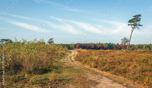 Meandering sandy path through a large Dutch nature reserve with forest and heath in the autumn season