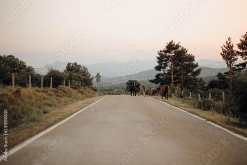Valokuva  caballos caminando por la carretera entre las montañas