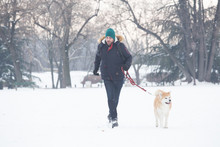 Akita Dog Walking With Its Owner On Snow. Winter Concept