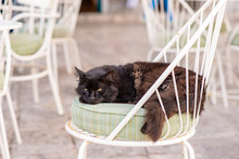A Beautiful Wild, Stray Cat Finds A Cozy Chair To Sleep On, At An Outdoor Cafe On The Enchanting Greek Island Of Hydra.