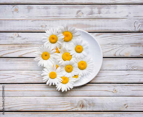 White saucer with chamomile flowers on vintage gray wooden table. Top view, copy space.