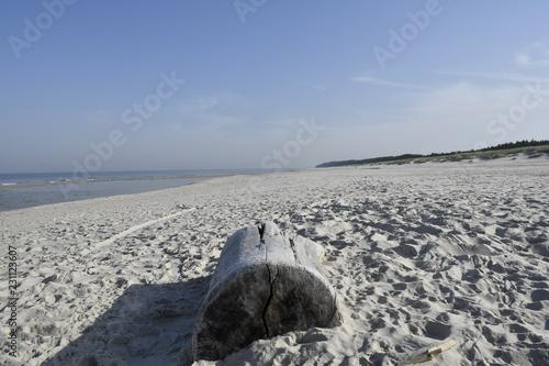 In de dag Schildpad Autumn impressions from the beach in Bialogora