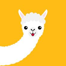 Llama Alpaca Animal Face, Long Neck. Cute Cartoon Funny Kawaii Character. Fluffy Hair Fur. T-shirt, Greeting Card, Poster Template Print. Childish Baby Collection. Flat Design. Yellow Background.