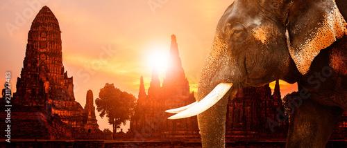 Photo ivory elephant and ayuthaya ancient pagoda with sunset sky background