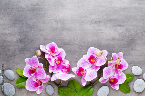 Fotobehang Orchidee Beauty orchid on a gray background. Spa scene.