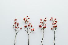 秋のノイバラの乾燥した赤い実