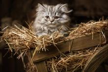 Striped Fluffy Kitten In An Ol...