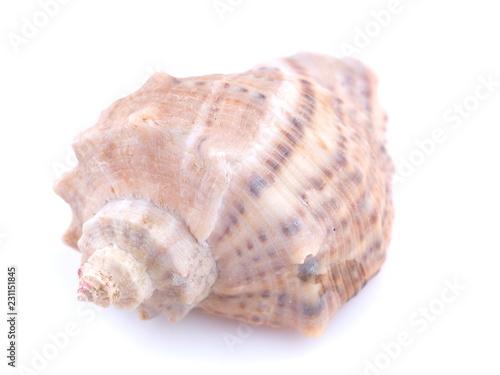 Fotografija  sea shell on white background