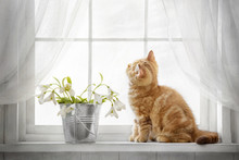 Small Red Tabby Kitten Sitting On The Window On A Sunny Day