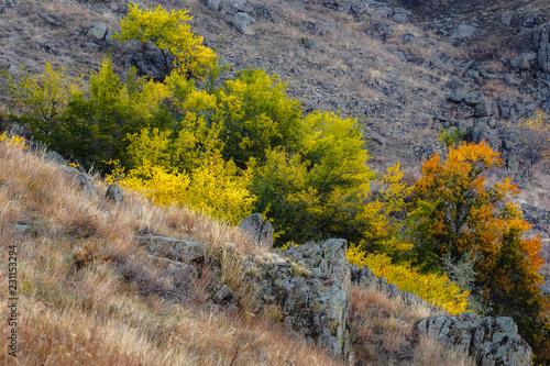 Fotobehang Honing Autumn in Macin Mountains