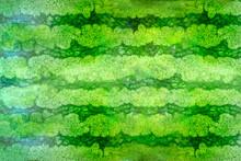 Striped Crust Of Watermelon, B...