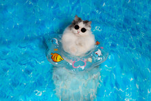 Cat With A Life Preserver Resting On The Sea