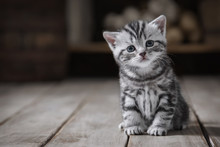 Portrait Of A Cute Kitten