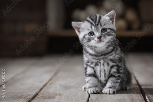 La pose en embrasure Chat Portrait of a cute kitten