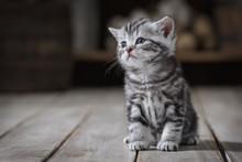 Portrait Of A Cute Kitten
