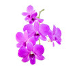 Isolated violet orchid and plumeria flower on the white background.
