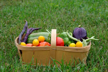 Basket Of Fresh Vegetables On Green Grass Background With Copy Space