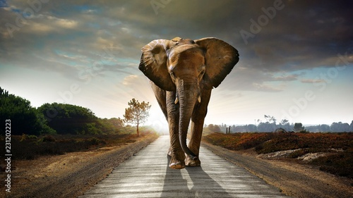 Poster de jardin Elephant elephant at sunset