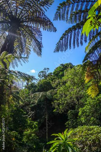 Deurstickers Oceanië New Zealand rain forest