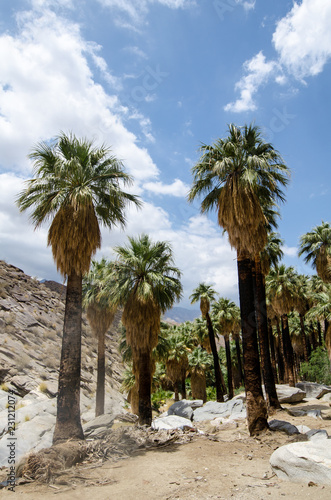 Valokuvatapetti Fan palm trees in the rocky landscape of Indian Canyons near Palm Springs Califo