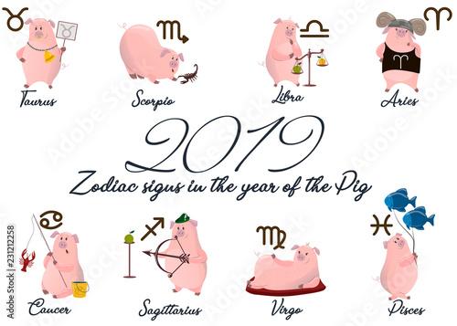 2019 Set of cute cartoon zodiac Pig  Vector illustration